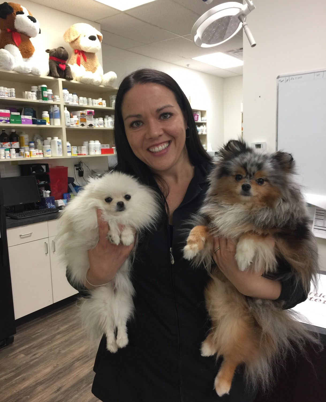 Andrea L. Swisher, DVM offering Veterinary Care at Little Critters Veterinary Hospital in Gilbert, AZ